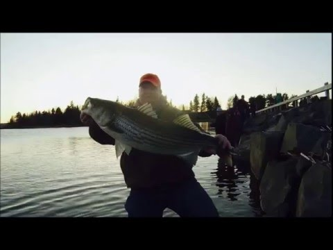 2016 Striped Bass Fishing on the Miramichi