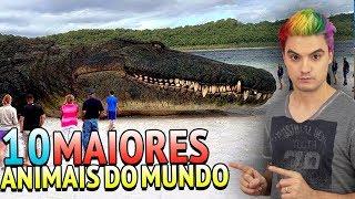 10 MAIORES ANIMAIS DO MUNDO!