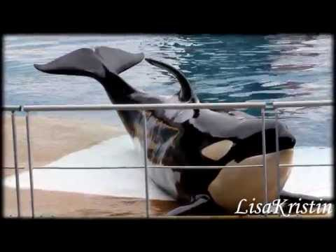 Best of Marineland Antibes - Killer Whales 2014