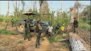Força-tarefa luta para acabar com o desmatamento na Amazônia