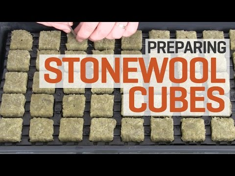 How To Prepare and Pre-soak Rockwool Cubes for Hydroponics—The Right Way!