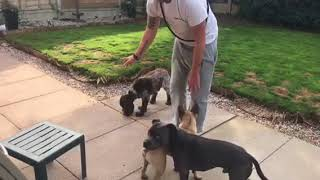 HOW TO PREVENT IN HOUSE DOG ON DOG AGGRESSION