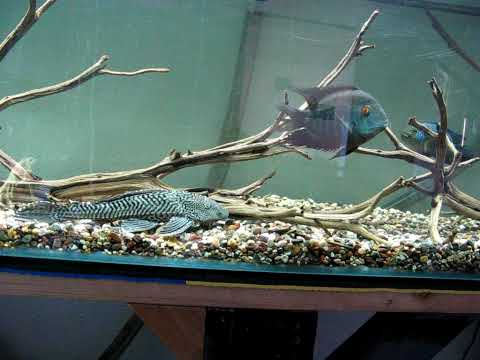 240 Gallon South American Cichlid Rescue Tank