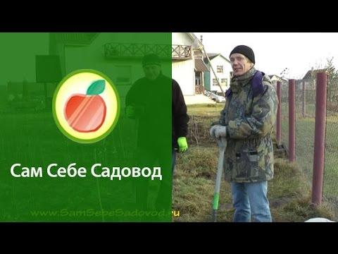 Видео как посадить яблоню
