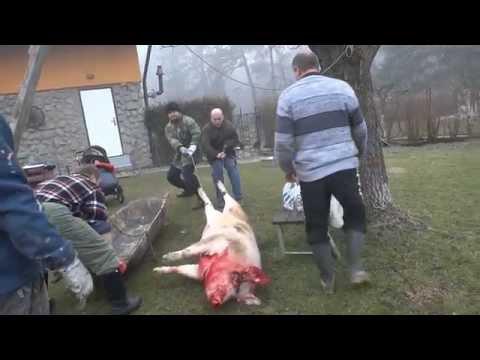 Zabijačka Houmra - březen 2014