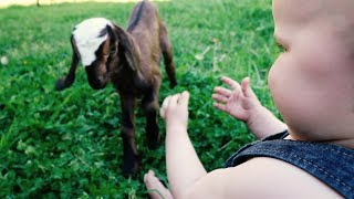 Baby Reacts to BABY FARM ANIMALS