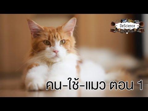 DeScience [by Mahidol] คน - ใช้ - แมว ตอนที่ 1