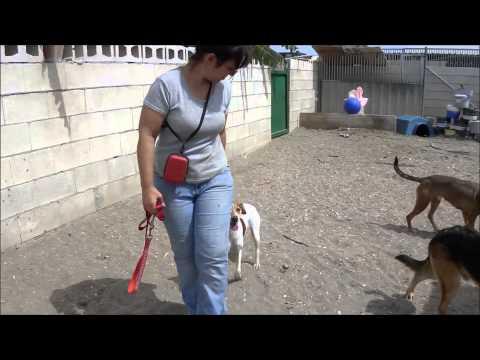 Animalinneed: Ana in the park