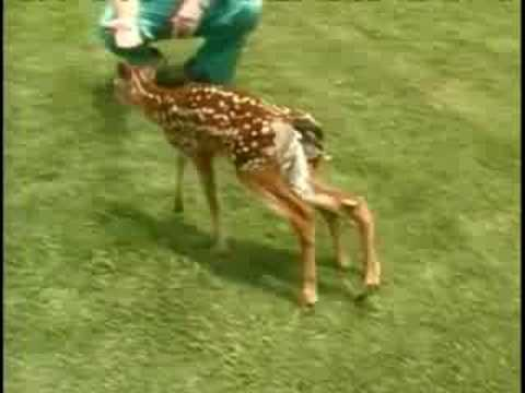 6-Legged Deer Attacked By Dog Music Videos
