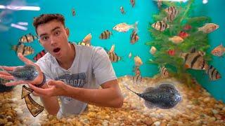 Special STINGRAY Finally ADDED To My Fish AQUARIUM!