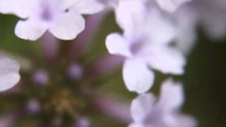 I Will Always Love You --Harmonica