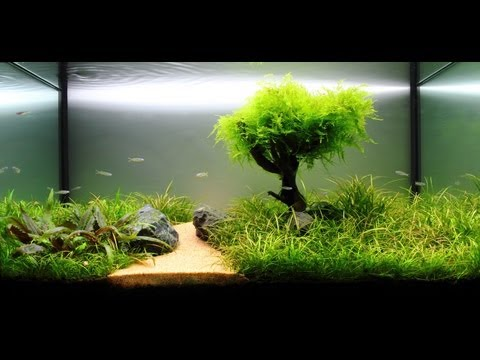 Freshwater Planted Aquarium - Fragments Of Memories