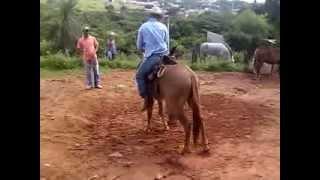 Fernando domando burro Japí primeira montaria ...