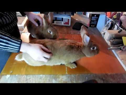 Каких кроликов лучше разводить на мясо??? НВЗК помесных!