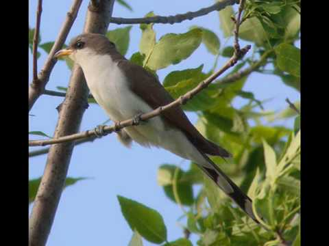 Sounds Of The Cuckoo Forest - Relaxation Video - No Music Just...