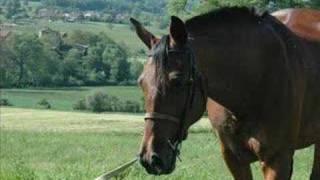 """Pension chevaux """"La ferme de Jeanne"""""""