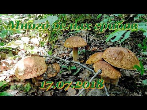 Много белых грибов. 17.07.2018