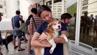 Hong Kong Dog Rescue HKDR 2013 overview - rescuing, rehoming and training