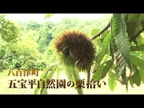 八百津町 「五宝平自然園」 ~ 秋の味覚を食べよう!栗拾い~