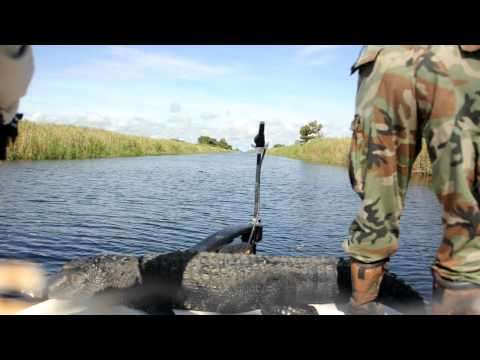 Alligator Hunting Lake Okeechobee Florida 13' Bull Gator AVI