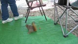 Feeding the Squirrels.flv
