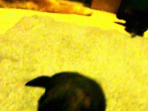 lady berrin june 9 2012 009.AVI video taken 7-4-12