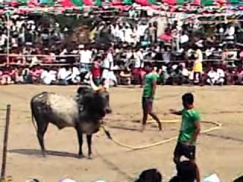 Jallikattu - Mudakathanmani Kamuthi Thoppurapatti Trailer2010 video