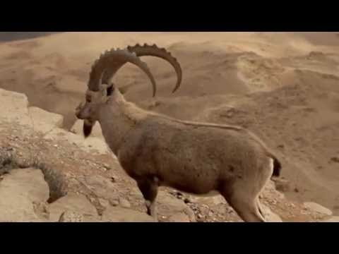 Moutain Goats@Mitspe Ramon 2013|Test Video
