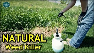 Testing Natural Weed Killer + Seeded Bare Spots Update