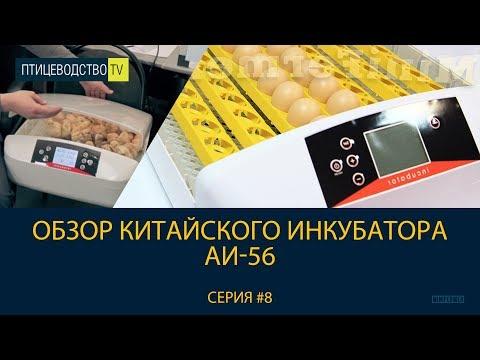 Птицеводство ТВ #8: Обзор китайского инкубатора для яиц АИ-56