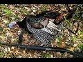 2014 TN Turkey Hunting