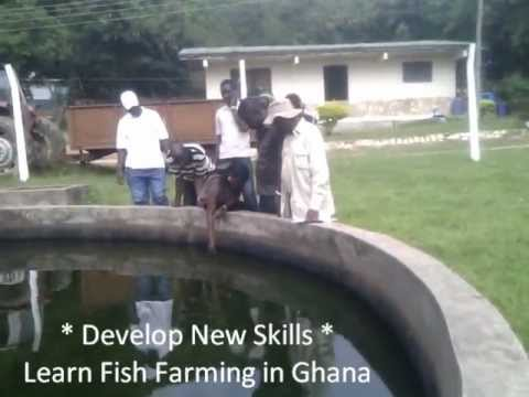 Tilapia Fish Farming   Fish Farming In Ghana West Africa   Fish Farm Training   Volta Lake