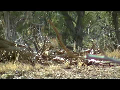 New Mexico zone 2b late season 2017 mule deer hunt