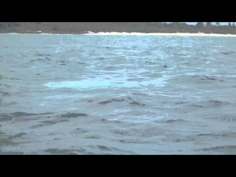 Baby White Whale - Migaloo Junior??