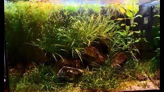260 days of my 25l Low-Tech aquarium. From set up till restart.
