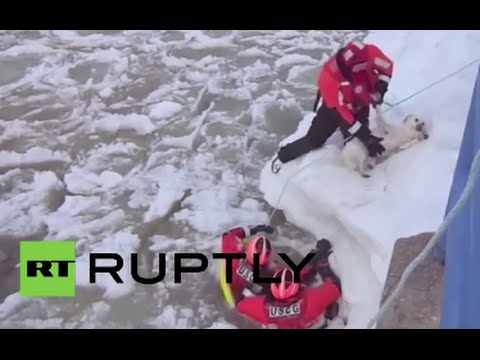 Rescue Cam: dog saved from freezing water by US coast guard