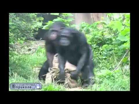 Мы с Тамарой ходим парой - мы с Тамарой обезьяны
