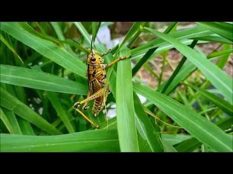 How To Kill A Grasshopper