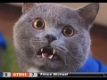NEW AARONS ANIMALS VIDEO COMPILATION 2017 Prince Michael FunnyVines mp3