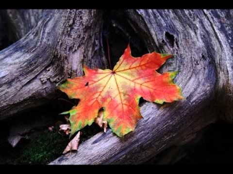UpperКОТ - Осеннее Настроение