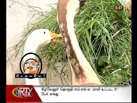 ndtv-hindu/Chellame / Episode-17, Seg- 1
