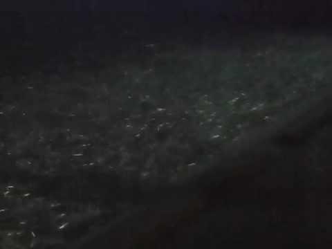千葉県外房(いすみ市)2012年6月3日イワシが大量にうちあげられた