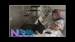 Hiker's Loyal Dog Refuses to Leave Her Side After She's Injured in 300-Foot Fall