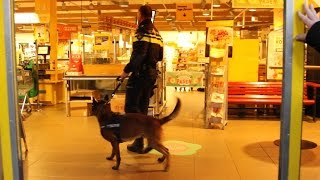 GPTV: Politiehonden trainen in supermarkt