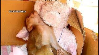 Full Sleepy! Baby Axel walk-play till tired had long sleep wit new friend teddy piggy BM2439
