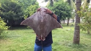 Cooking a 40 Pound Stingray in My Village - Cooking a Big Stingray - My Village My Food