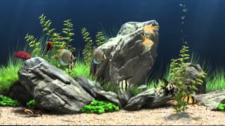 HD Virtual Aquarium #1 (1080p)
