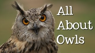 All About Owls for Kids: Backyard Bird Series - FreeSchool