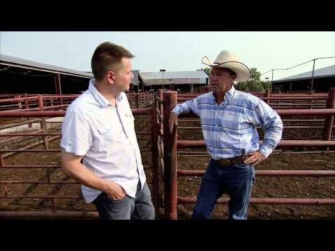 Cattle Sale Barn - America's Heartland