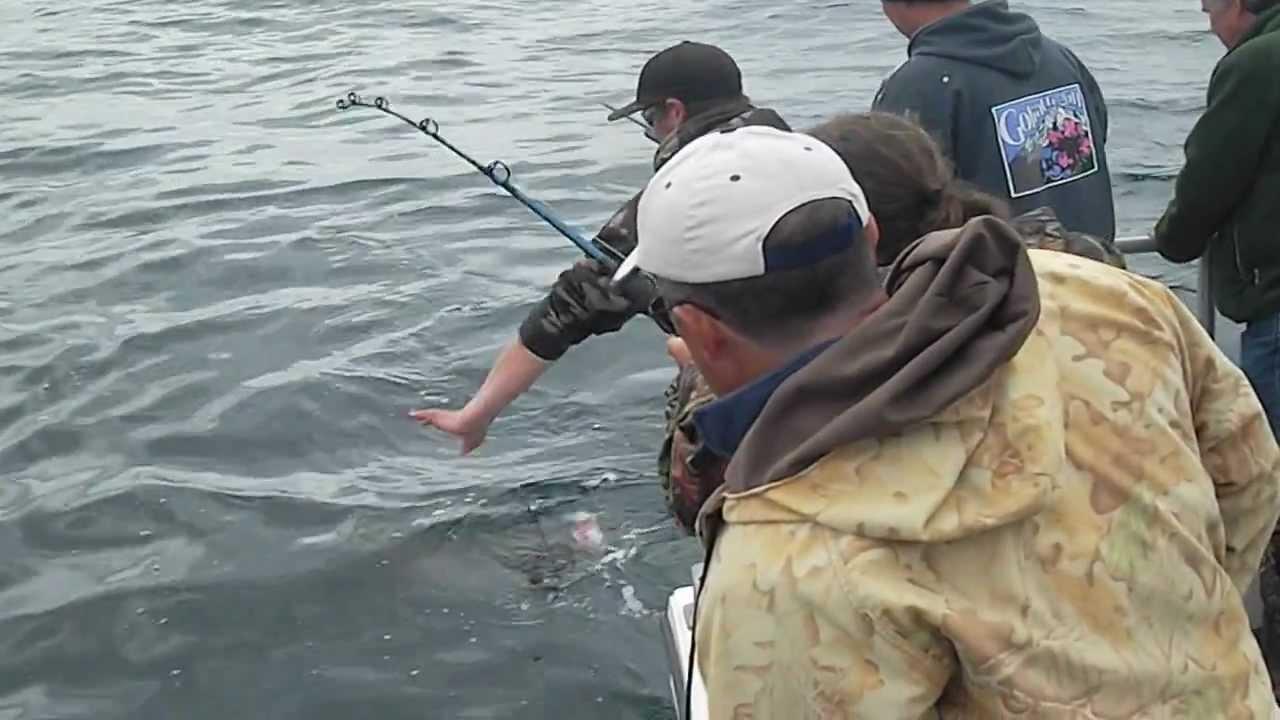 Halibut fishing seward alaska with puffin charters june for Seward alaska fishing reports